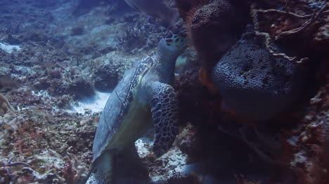 Turtle-Dive-00