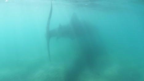 Whale-Shark-01