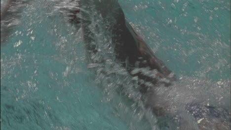 A-man-swims-across-a-pool
