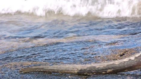 Marine-iguana-leaving-the-water-Punta-Suarez-on-Espanola-in-the-Galapagos-Islands-National-Park