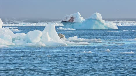 Real-time-flow-of-sea-ice-floating-past-grounded-icebergs-in-Svalbard-archipelago-Norway