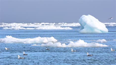 Real-time-flow-of-sea-ice-floating-past-grounded-icebergs-in-Svalbard-archipelago-Norway-1