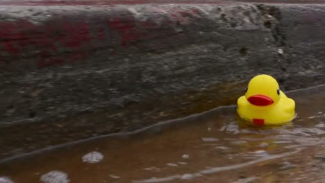 Yellow-rubber-duck-floating-down-a-street-gutter-after-heavy-rain-in-Ventura-California