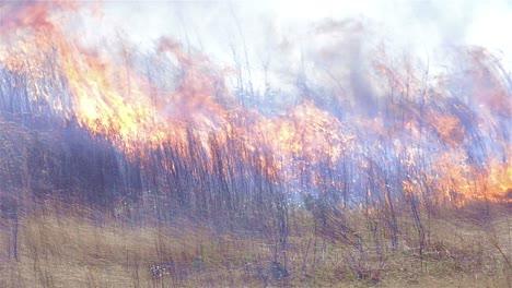 Wide-view-of-a-prescribed-grass-burn-on-a-powerline-corridor-near-Baxley-Georgia