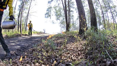 Low-angle-of-a-fire-crew-member-lighting-a-prescribed-fire-with-a-drip-torch-in-Moody-Forest-Natural-Area-managed-in-Georgia