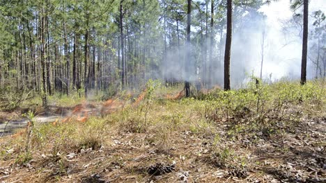 A-fire-crew-member-lighting-a-prescribed-fire-with-a-drip-torch-near-Baxley-Georgia