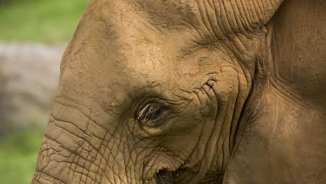 Close-Up-Of-Elephant
