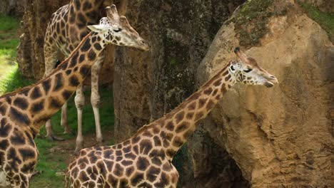 Animals-in-Zoo-89