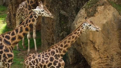 Animales-en-el-zoológico-89