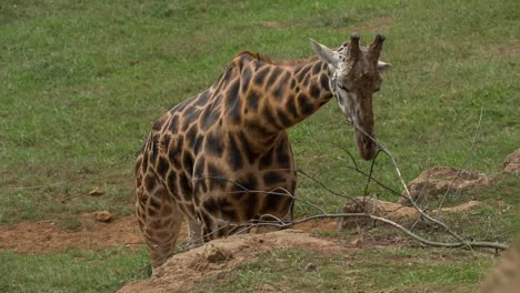 Tiere-Im-Zoo-96