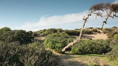 Able-Beach-00