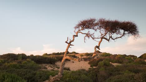 Able-Beach-Tree-03
