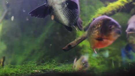 Aquarium-27