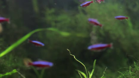 Aquarium-35