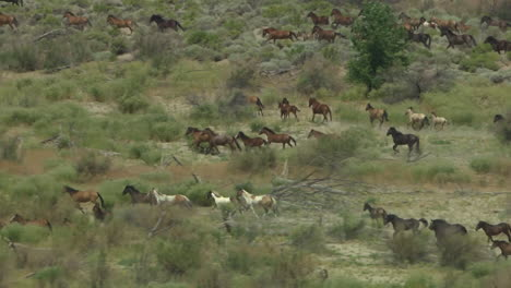 An-Aerial-Of-Wild-Horses-Running
