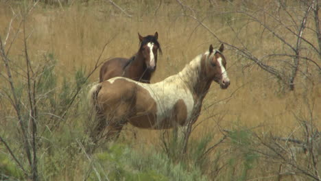 An-Aerial-Of-Wild-Horses-Grazing-In-A-Field-1