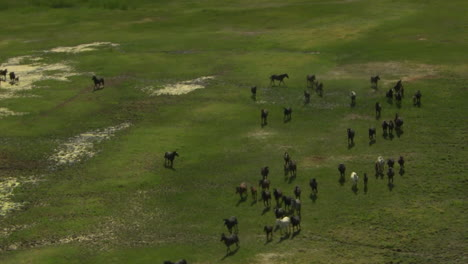 An-Aerial-Of-Wild-Horses-Running-3