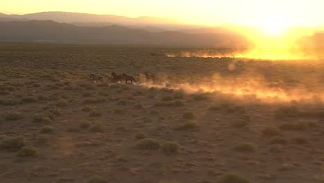 Very-Good-Aerial-Of-Wild-Horses-Running-Against-Sunset