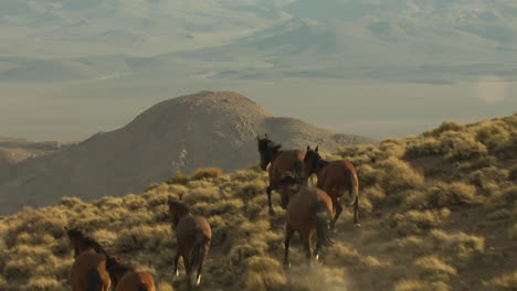 An-Aerial-Of-Wild-Horses-Running-Near-A-Cliff