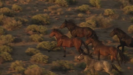 An-Aerial-Of-Wild-Horses-Running-4