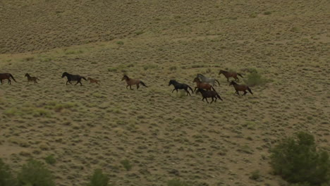 An-Aerial-Of-Wild-Horses-Running-5
