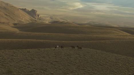 An-Aerial-Of-Wild-Horses-Running-Near-A-Cliff-1