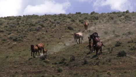 Wild-Horses-Graze-In-Open-Rangeland-In-Wyoming-2