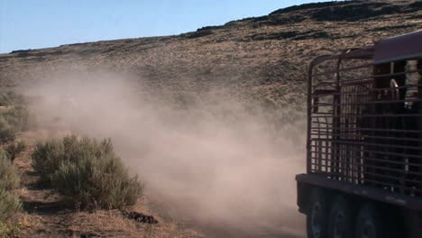 The-Bureau-Of-Land-Management-Releases-Wild-Horses-Into-The-Wild