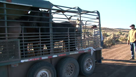 The-Bureau-Of-Land-Management-Releases-Wild-Horses-Into-The-Wild-1