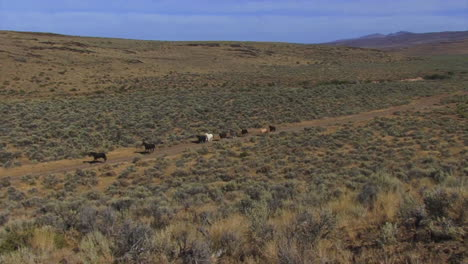 The-Bureau-Of-Land-Management-Releases-Wild-Horses-Into-The-Wild-3
