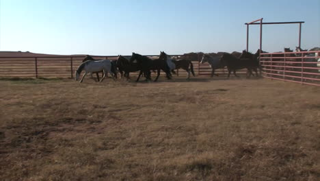 Wild-Horses-Are-Herded-Through-Pens-By-The-Bureau-Of-Land-Management