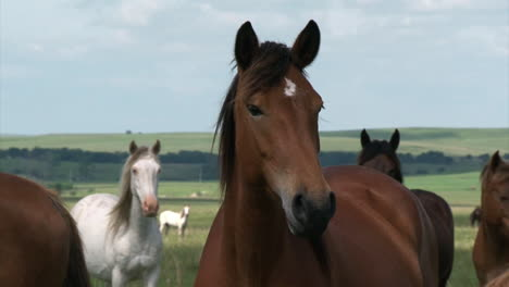 Wild-Horses-Enjoy-Long-Term-Pasture-In-The-Spring-Provided-Buy-The-Bureau-Of-Land-Management