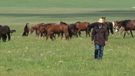 Wild-Horses-Enjoy-Long-Term-Pasture-In-The-Spring-Overseen-By-The-Bureau-Of-Land-Management