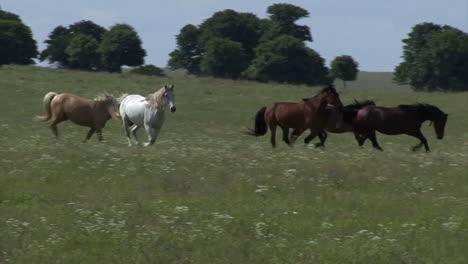 Wild-Horses-Running-1