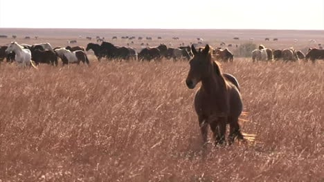 Wild-Horses-Enjoy-Long-Term-Pasture-In-The-Spring-Overseen-By-The-Bureau-Of-Land-Management-1