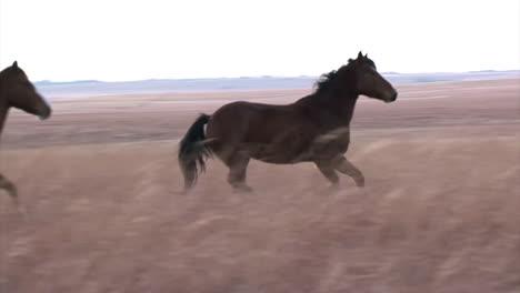 Wild-Horses-Running-2