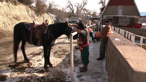 The-Wild-Horse-Inmate-Program-In-Colorado-Domesticates-Horses