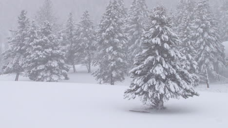 Heavy-Snow-Falls-On-Trees-In-A-Forest-In-Yellowstone-National-Park-1