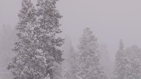 Heavy-Snow-Falls-On-Trees-In-A-Forest-In-Yellowstone-National-Park-2