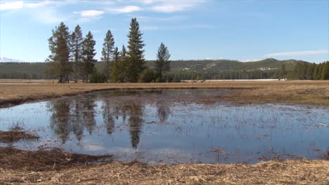 A-Pond-In-Summer-In-Yellowstone-National-Park