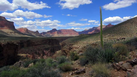 Beautiful-Time-Lapse-Over-The-Desert-Of-Grand-Canyon-With-Yucca-Plant