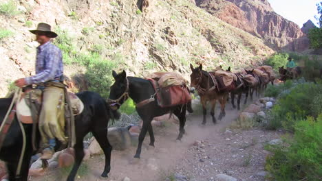 A-Pack-Mule-Team-Navigates-The-Trail-To-The-Bottom-Of-The-Grand-Canyon