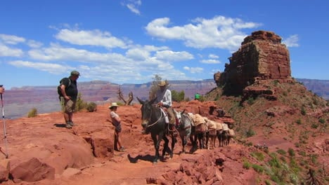 A-Pack-Mule-Team-Navigates-The-Trail-To-The-Bottom-Of-The-Grand-Canyon-3