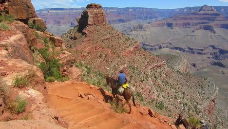 A-Horseback-Riding-Team-Navigates-The-Trail-To-The-Bottom-Of-The-Grand-Canyon