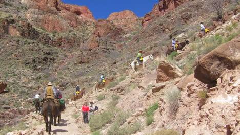 Ein-Reitteam-Navigiert-Den-Weg-Zum-Grund-Des-Grand-Canyon-3