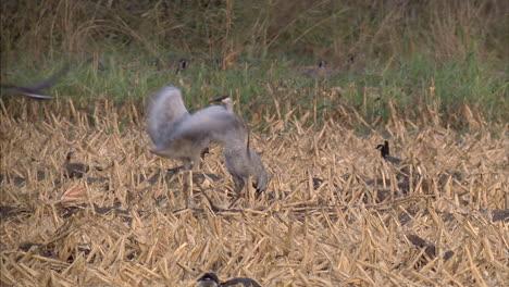 Californias-Delta-Region-Near-Sacramento-Is-An-Important-Wetland-Breeding-Ground-For-Birds