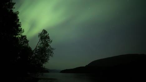Aurora-12