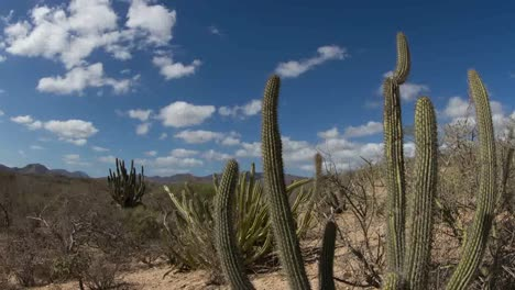 Baja-Desert-01