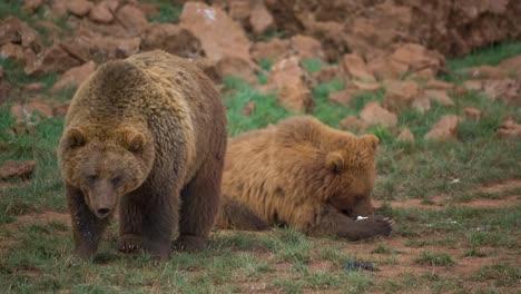 Bear-04