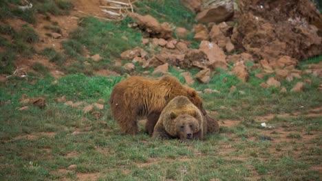 Bear-07